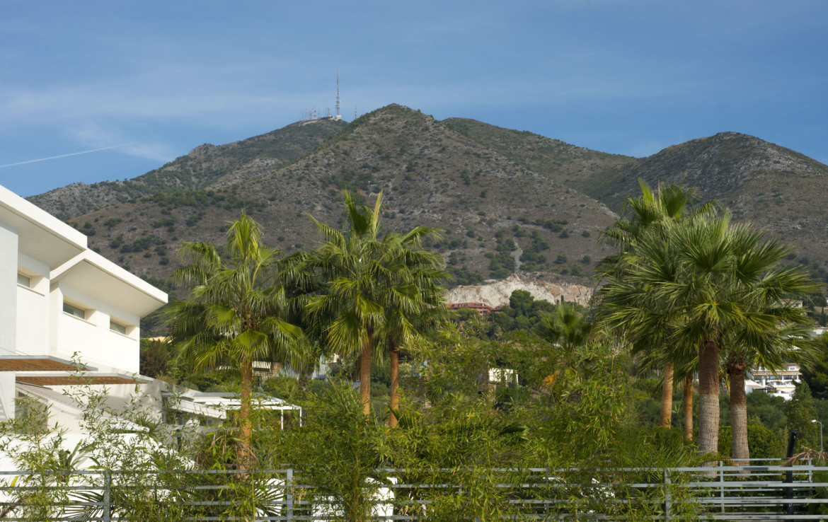 mountain and palms views